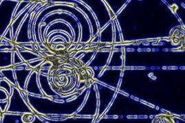 Particle Experiment